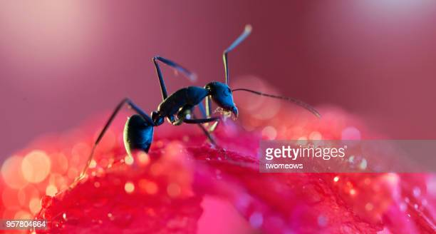 artistic impression of insect. - ants stock pictures, royalty-free photos & images