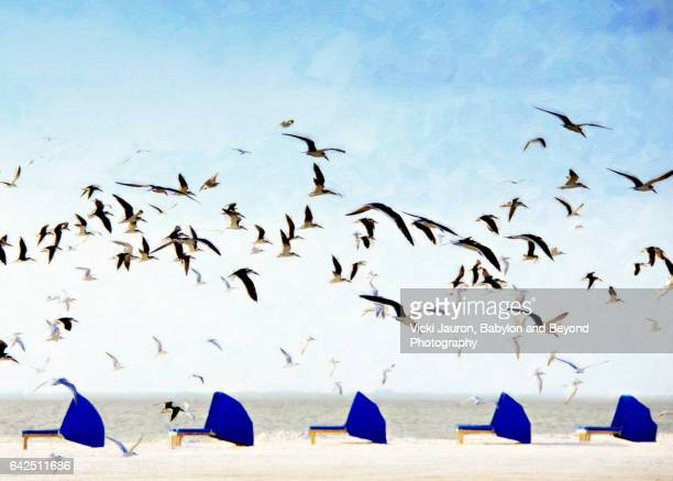 artistic view of black skimmer (rynchops niger) over beach chairs - fort myers beach stock pictures, royalty-free photos & images