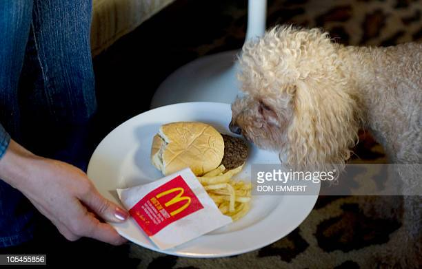 Artistphotographer Sally Davies whose works include her McDonald's Happy Meal project holds the project in front of her dog Charlie October 14 2010...