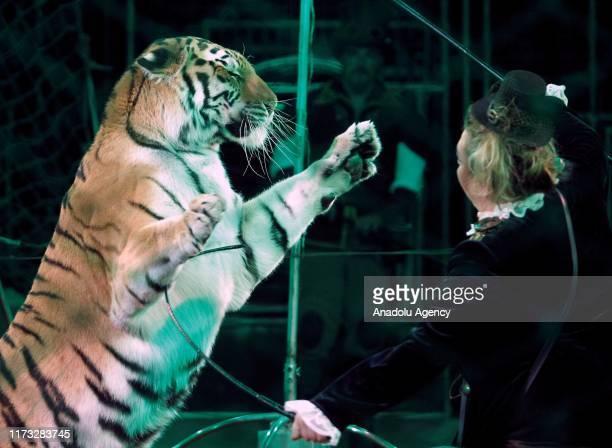 Tigers киев период работы без статусной модели не задан запись документа запрещена