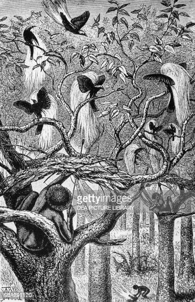 Aru men hunting for birdsofparadise Malaysia 1890 engraving by Alfred Russell Wallace