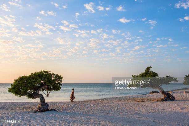 aruba, divi divi bomen op eagle beach - aruba stockfoto's en -beelden