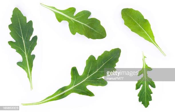 rucola set - rocket stock pictures, royalty-free photos & images