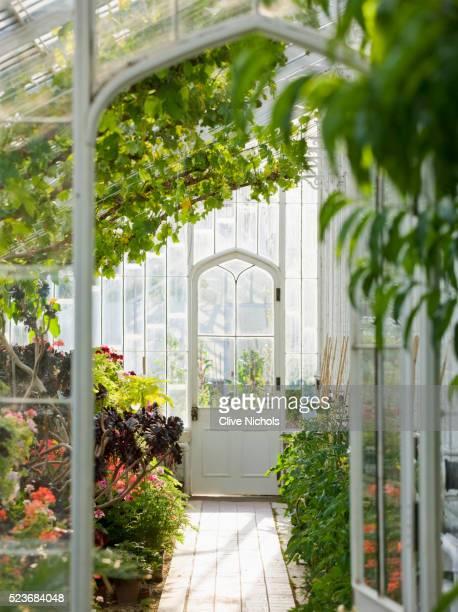 Arundel Castle Garden, West Sussex: The Collector Earls Garden; The interior of the greenhouse -VI