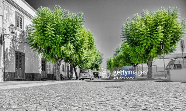 arvores verdes e calçada - calçada stock pictures, royalty-free photos & images