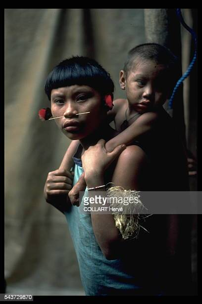 As a result of contact with gold miners the Yanomami get malaria become acculturated and suffer from hunger Unless invasions of their territory are...