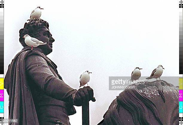 As a warning from the London Weather Centre was given that frost snow and freezing conditions where heading for the Capital these seagulls found a...