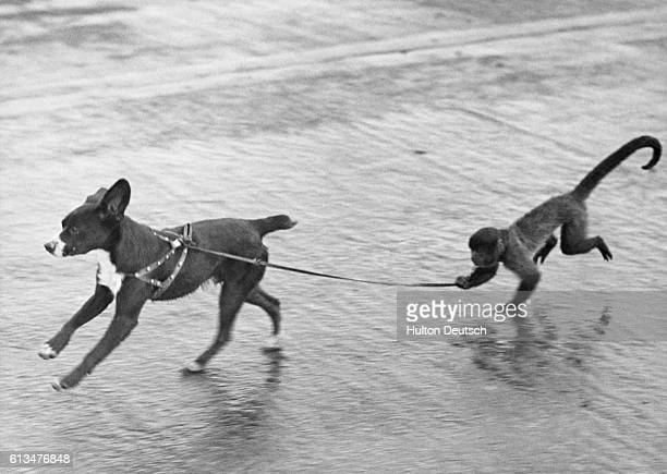 As frisky and friendly a pair of aerial mascots as you'll find in Britain are 'Scrappy' and 'Joe' a pup and monkey team belonging to the crews of the...