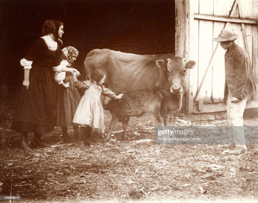 Petting A Calf : News Photo