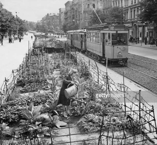 As the Soviets constrict the supply routes into Berlin during the Berlin Blockade the inhabitants react by growing their own vegetables and tobacco...