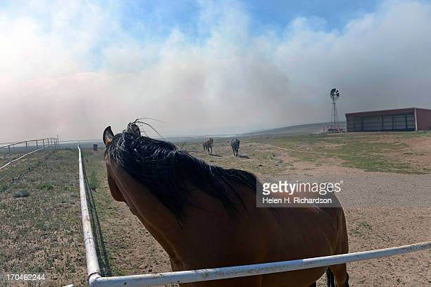 As their owners work aggressively to create a fire line around their ranch just off of Black Forest Road to save it from the Black Forest Fire their...