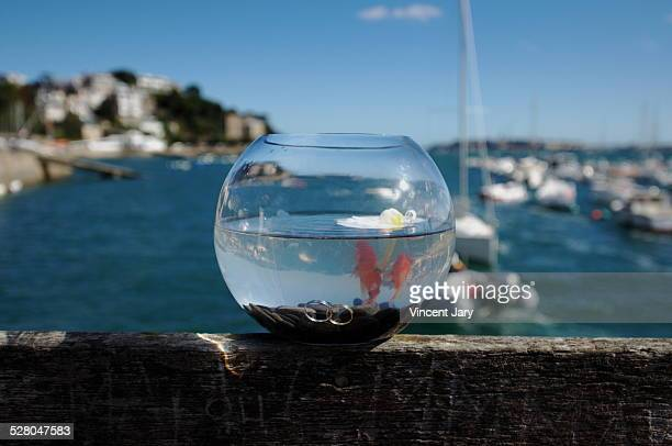 as two loving fish - irony stockfoto's en -beelden