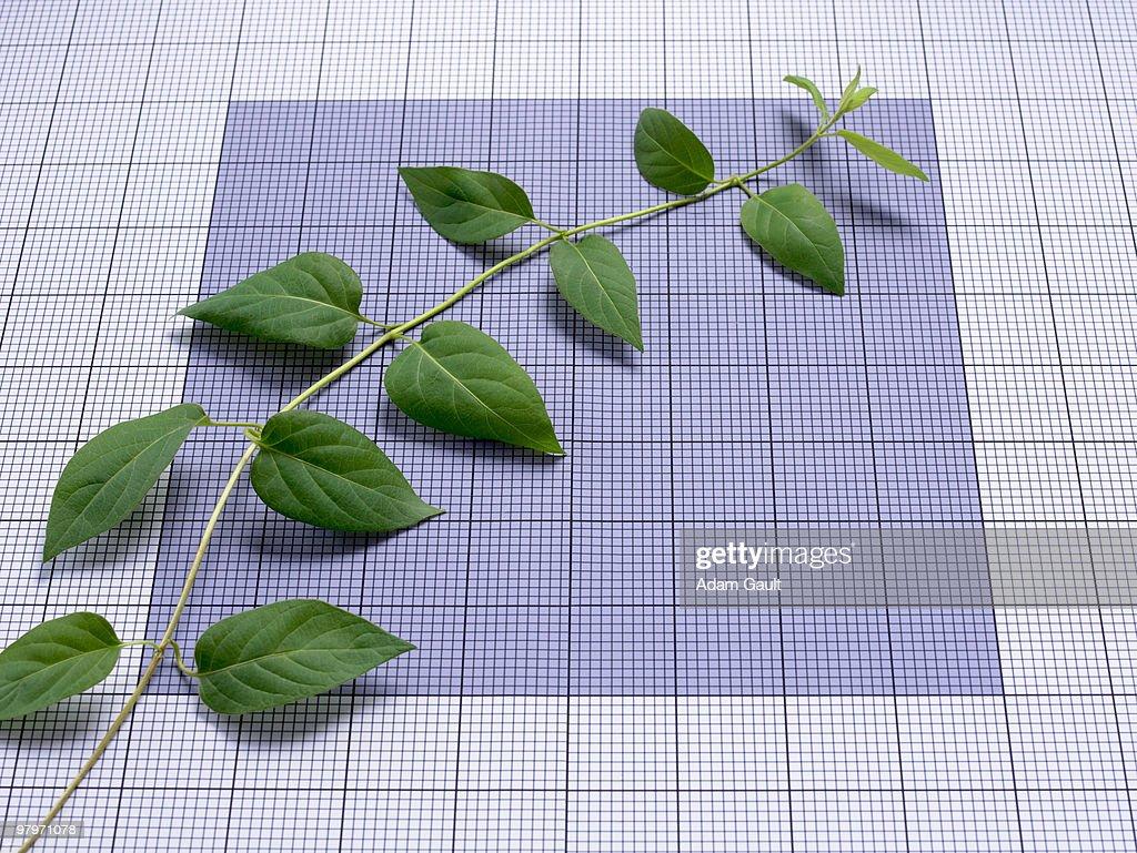 Ascending vine on graph paper : Stock Photo