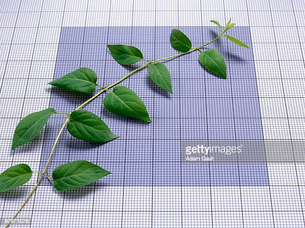 Ascending vine on graph paper