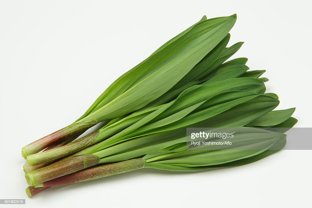 Ascetic Garlic : Stock Photo
