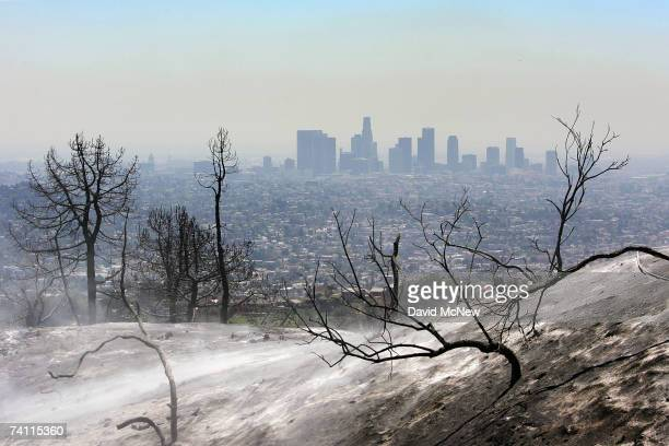 Ash blows from the scorched hills overlooking downtown Los Angeles as firefighters work to contain a wildfire in Griffith Park the nation's largest...