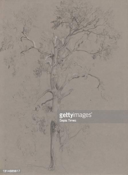 Ash Tree in Ashstead Park, Peter DeWint, 1784–1849, British, undated, Black chalk and white chalk on medium, slightly textured, gray wove paper,...