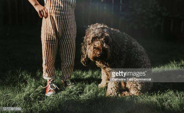 ashamed dog in a garden beside a child - domestic animals stock pictures, royalty-free photos & images