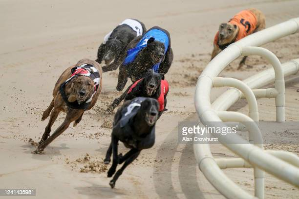 Ashgrove Raven rails out of the last bend to get up on the run-in to win at Nottingham Greyhound Stadium on June 02, 2020 in Nottingham, England....