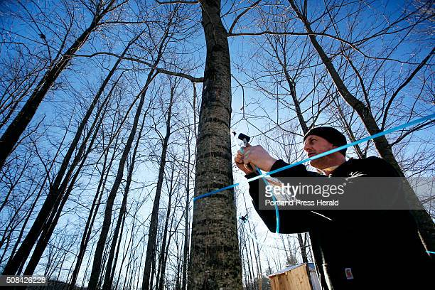 Ashley Gerry runs sap lines at Maple Hill Sugar House on Tuesday February 2 2016 Gerry who has been sugaring since he was six yearsold says it is...