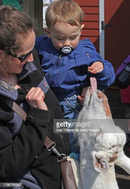 Ashley Nicholls of Lake Elmo held her 21 month old son Ethan as he fed the goats in the Minnesota Zoo's Farm Babies exhibit on 3/31/13 The annual...
