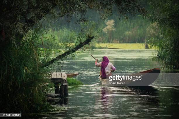 ashmiri people paddle a shikara (traditional wooden boat) at dal lake of kashmir - shaifulzamri stock pictures, royalty-free photos & images
