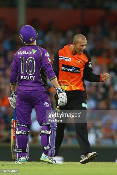 Ashton Agar of the Scorchers celebrates the wicket of Ben McDermott of the Hurricanes during the Big Bash League match between the Perth Scorchers...