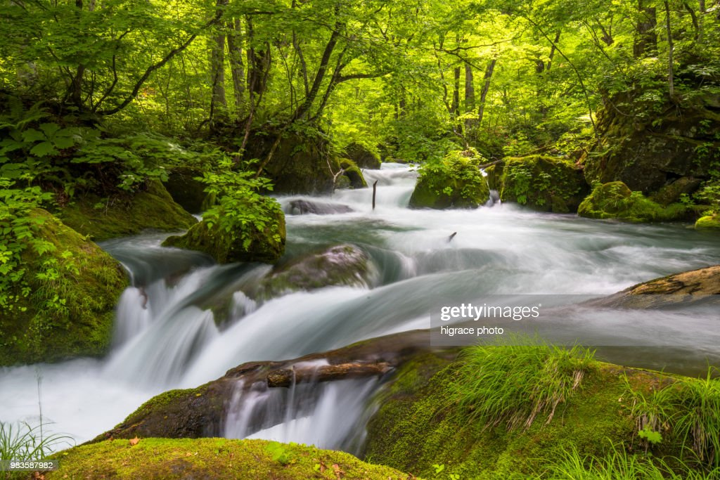 Asia - Beautiful landscape. Spring Oirase Stream (Oirase Keiry) is a picturesque mountain stream in Aomori Prefecture that is one of Japan's most famous and popular destinations. : Stock Photo