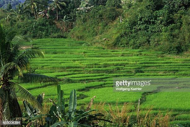 Asia Indonesia Sumatra Near Bukittinggi Rice Fields