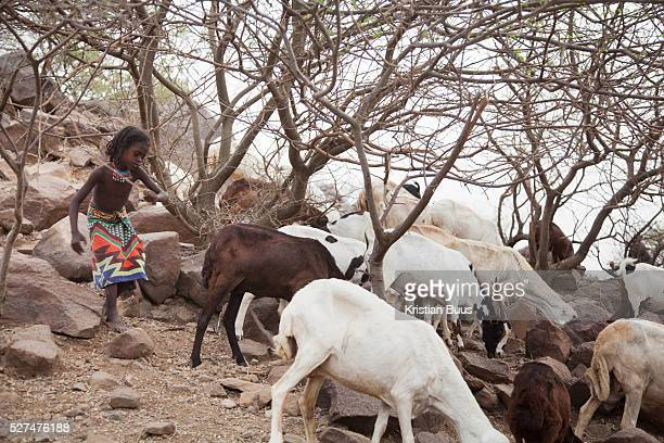 Asia tend to her herd of goats She lives with her family in a small compound in the countryside outside Delafagi town The oldest ever human remains...