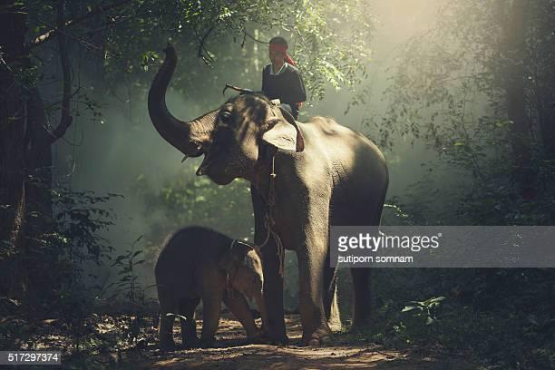 Asia,Elephant Family