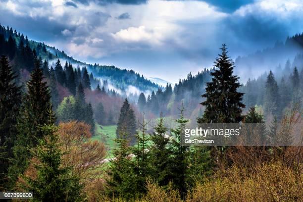 Asiago, il bosco a primavera
