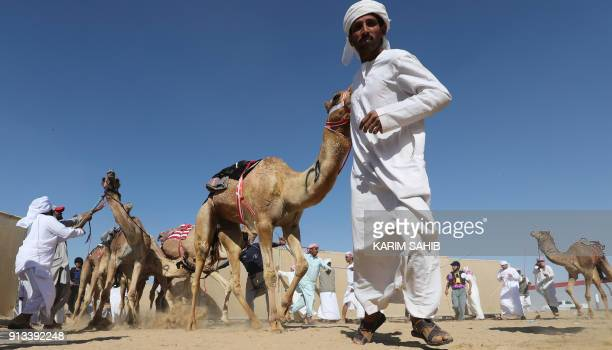 Asian and Emirati workers gather camels ahead of a race during the Sheikh Sultan Bin Zayed alNahyan camel festival at the Shweihan racecourse in...
