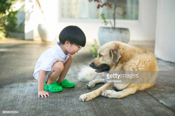 asian boy looking bonding time with pet dog. - confrontation stock pictures, royalty-free photos & images