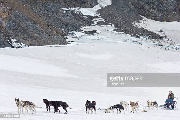 asian chinese couple looking at camera with all dog sledding in alaska, usa - dog sledding stock photos and pictures