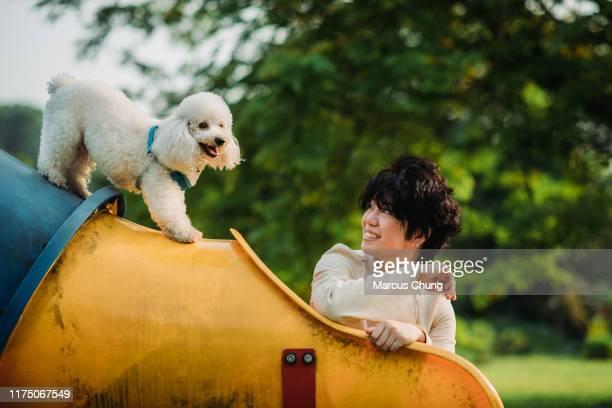 アジアの中国の女性は、午前中に公共の公園で彼女のペットのおもちゃのプードルとの時間を結合します - 動物芸 ストックフォトと画像