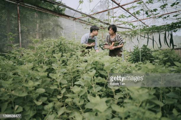 asian chinese mid adult woman examining her organic farm growth with digital tablet recording with her mother