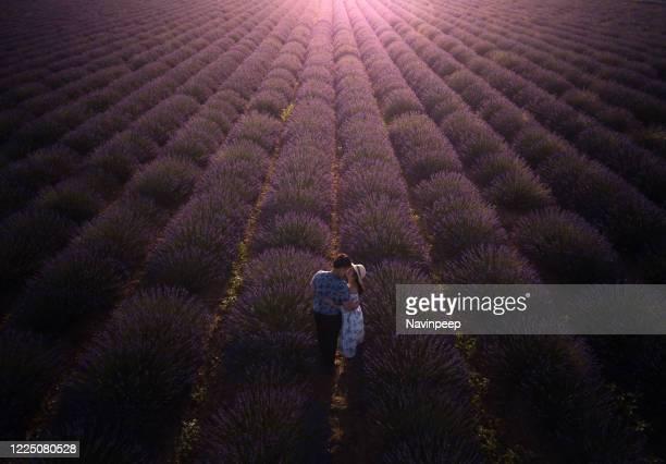 asian couple kissing in lavender field, provence, france - アルプドオートプロバンス県 ストックフォトと画像