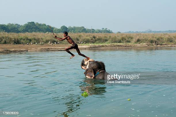 CONTENT] Asian elephant and mahout trainer in the Rapti River in Chitwan National Park Nepal