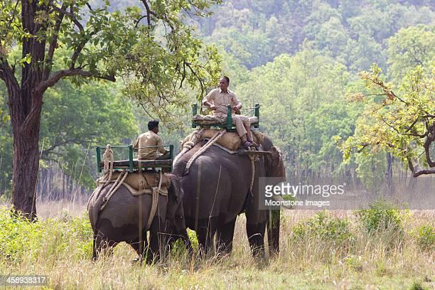 asian elephant in bandhavgarh np, india - bandhavgarh national park stock pictures, royalty-free photos & images