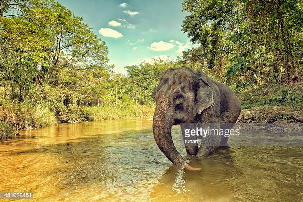 asian elephant - phuket province stock pictures, royalty-free photos & images