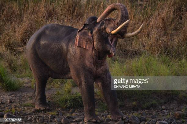 asian elephant tusker in india - indian elephant stock pictures, royalty-free photos & images
