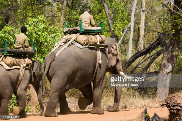 asian elephants in bandhavgarh np, india - bandhavgarh national park stock pictures, royalty-free photos & images