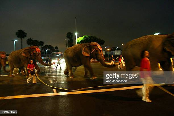 Asian elephants walk to the Staples Center hours before a memorial service for recently deceased singer Michael Jackson is to take place at the same...