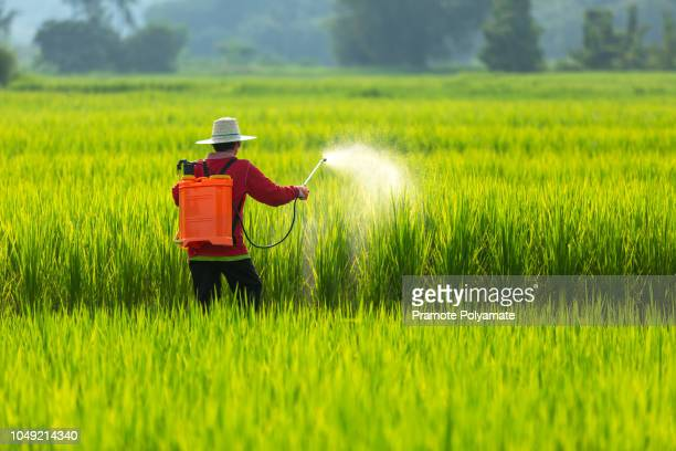 asian farmer peasantry spraying pesticides in rice fields - crop sprayer stock pictures, royalty-free photos & images