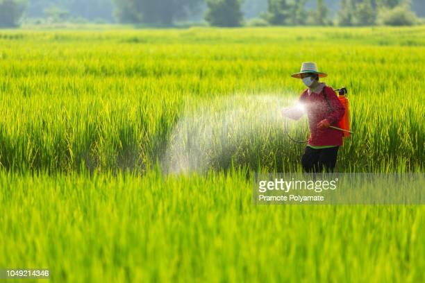 asian farmer peasantry spraying pesticides in rice fields - asian farmer ストックフォトと画像