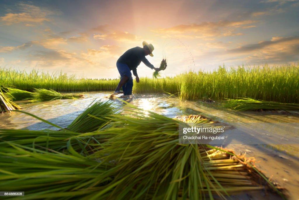Asian farmer : Stockfoto