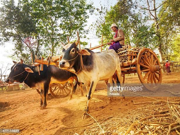 asiatische farmer reiten hölzernen wagen, myanmar - ox cart stock-fotos und bilder