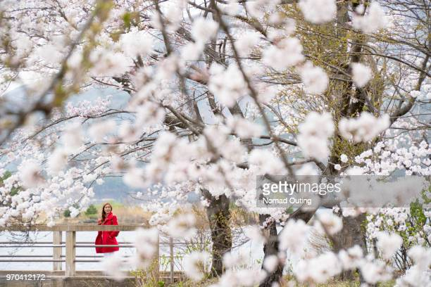 asian female tourist standing with cherry blossom tree. - cherry blossom in full bloom in tokyo stock pictures, royalty-free photos & images