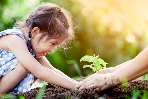 Asian little girl and parent planting young tree on black soil together 690416076